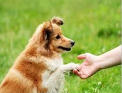 cachorro2 - copia