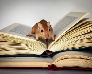 3er Premio: 'Ratón de biblioteca'.