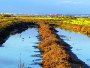 Los tajos de las antiguas salinas perviven entre el paisaje y permiten la supervivencia de muchas especies.