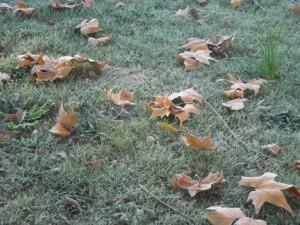 Otro efecto típico asociado al cambio climático es el acortamiento de estaciones intermedias.